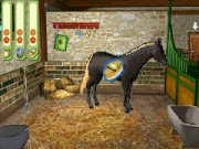 Paard & Pony : Paard in Galop Game