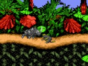Donkey Kong Country on GBC